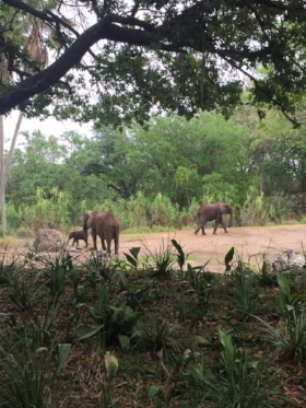 Elephants on the Kilimanjaro Safari at Animal Kingdom