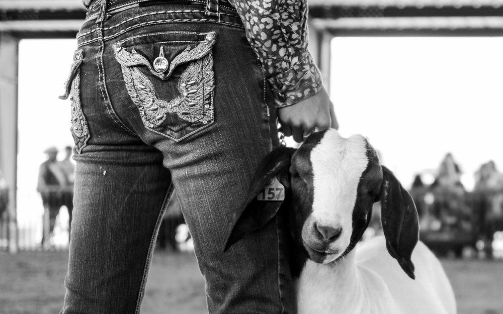 America Rodeo-9.jpg