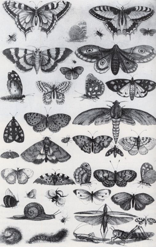 Vicorian Natural History illustration. (click on img for link)