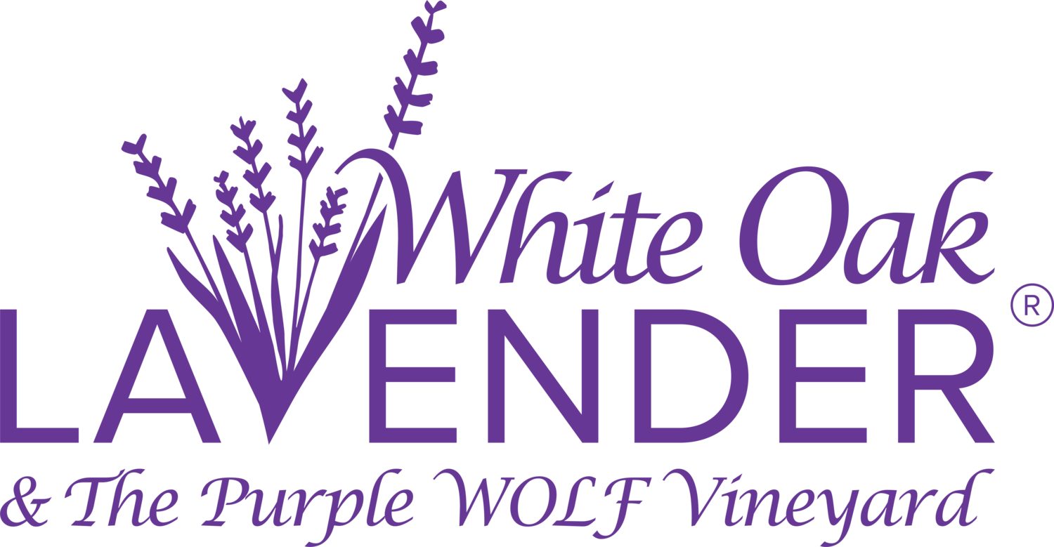 White Oak Lavender & The Purple WOLF Vineyard