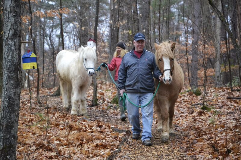 A fun and informative visit for your group or family. Meet, the herd, learn about the Icelandic Horse, groom, photograph, feed carrots and take a pony ride!  Fee: 60 - 75 minute session, $60.00