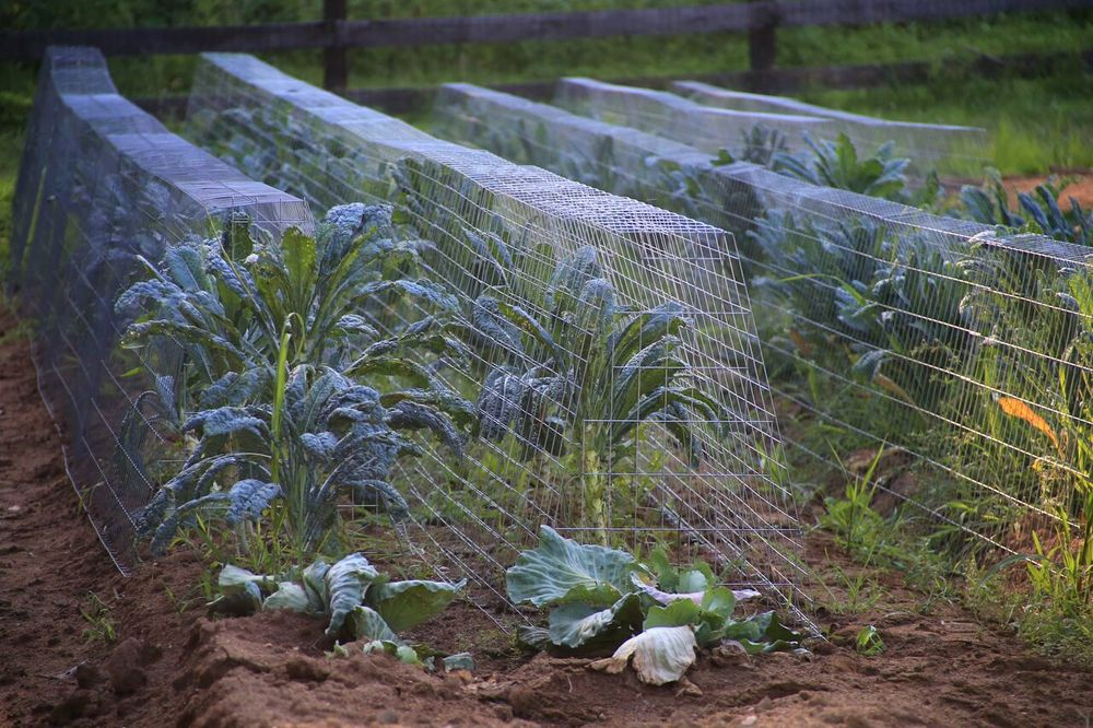 Garden Cages Expand For Large Garden Rows