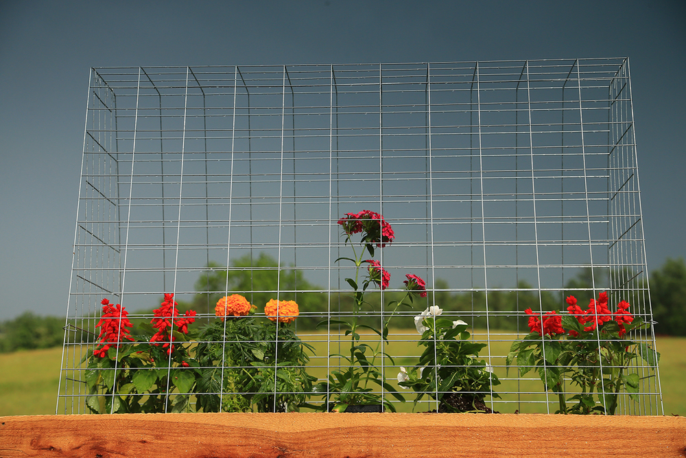 Garden Cages Stop Deer and Wildlife From Eating Your Vegetable Garden