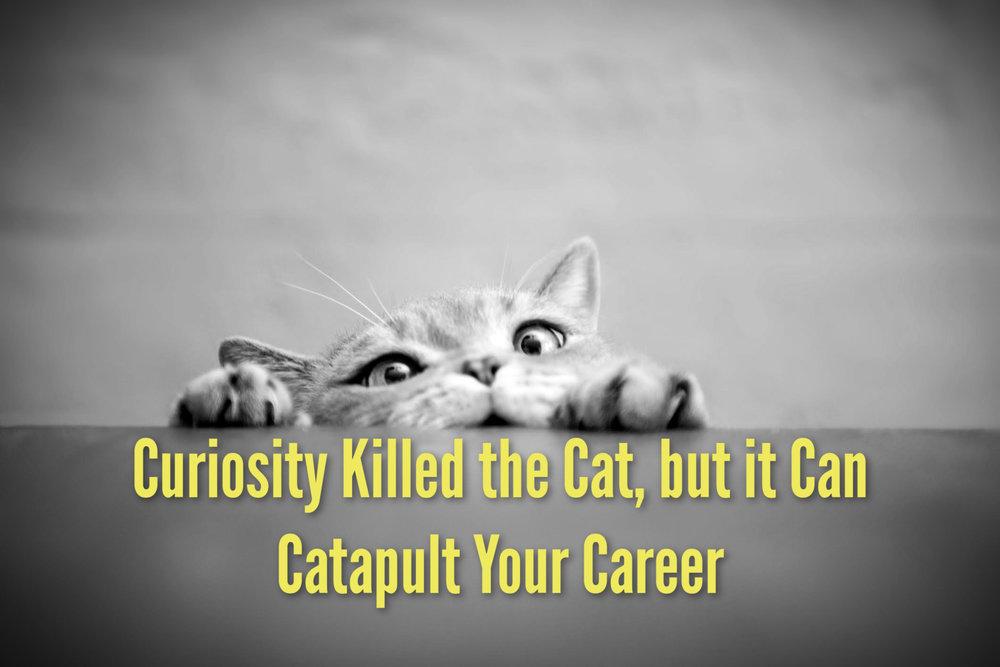 CuriousCatFinal.jpg