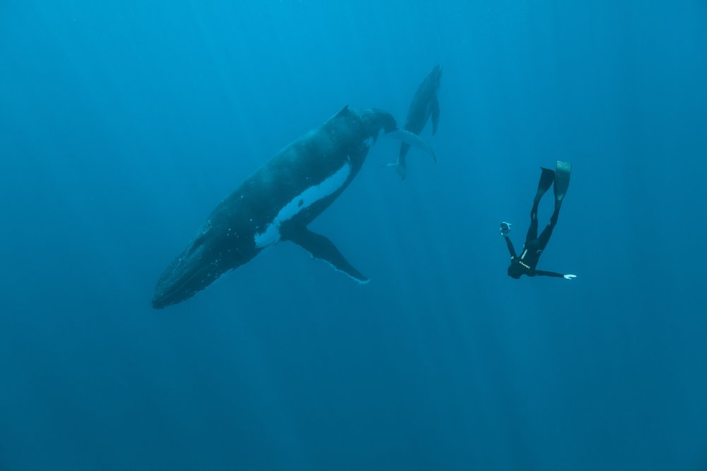 Matt Draper: Freediving and Photography