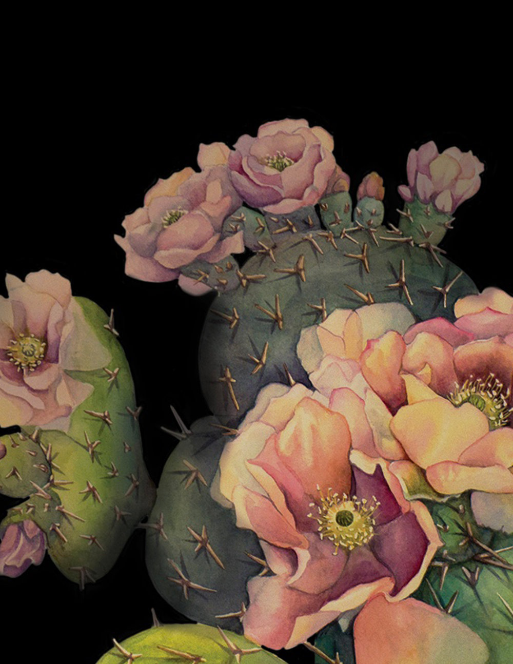 Botanical Illustration - Watercolor portraits of unusual plants, cacti, and flowers