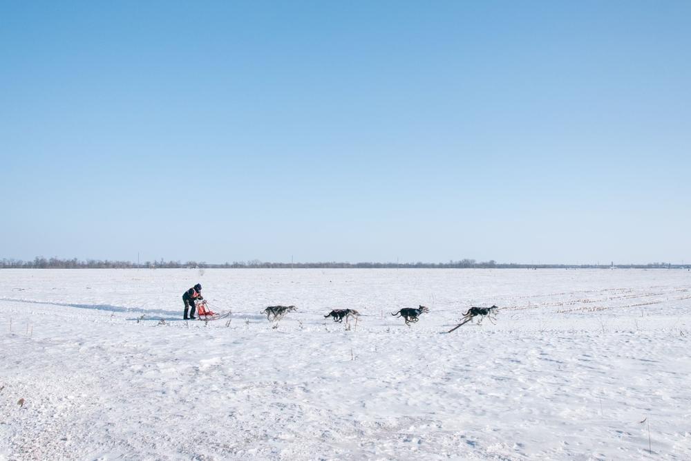 Swedish Lapland Tours | Dog Sledding in Kiruna, Sweden 4