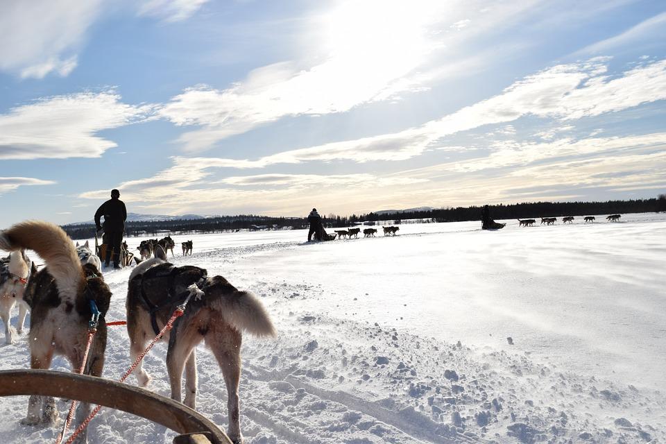 Swedish Lapland Tours | Dog Sledding in Kiruna, Sweden 5