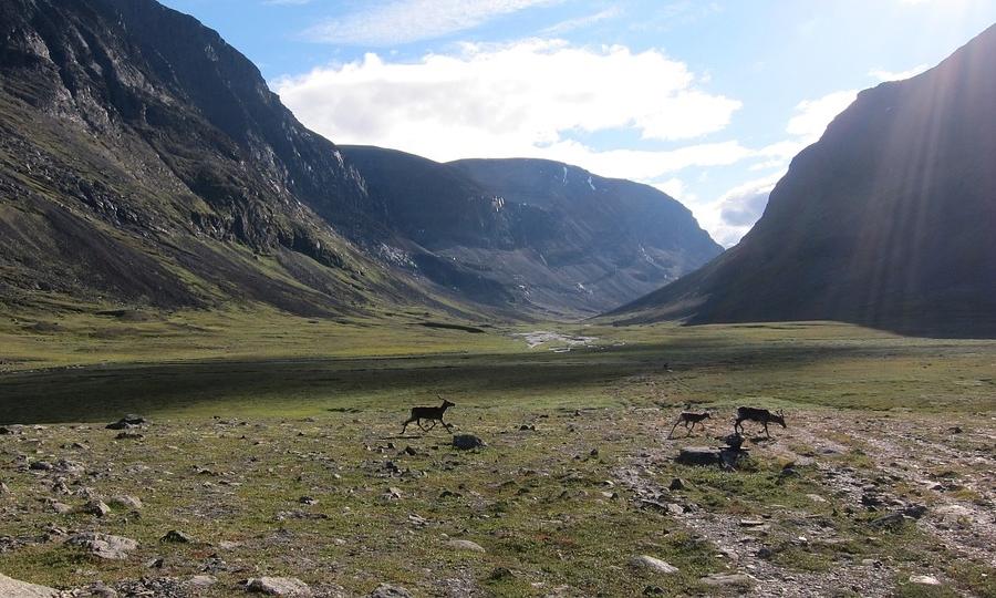 Sarek and Padjelanta National Park Guided Tours 2