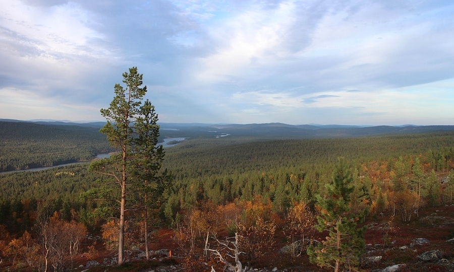 forest-1250956_960_720.jpg
