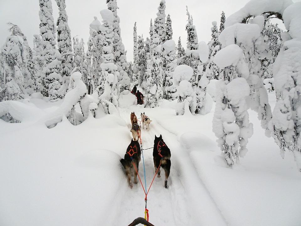 dog sledding 2.jpg