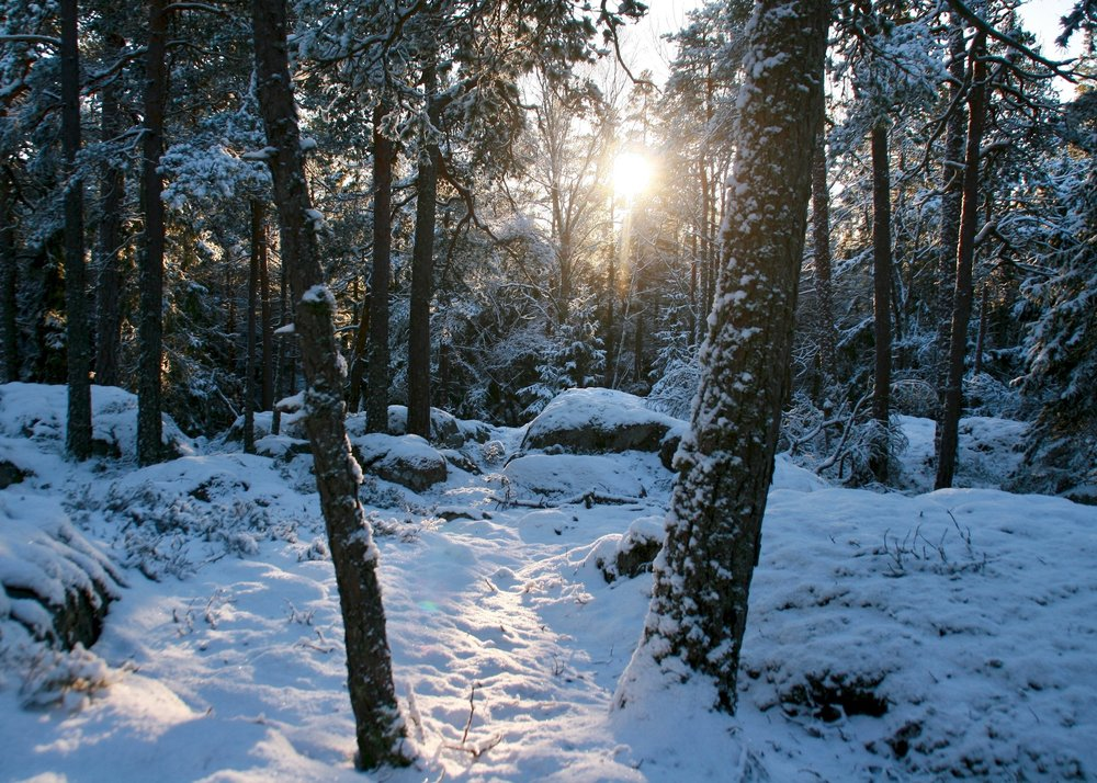 stockholm winter hike.jpg