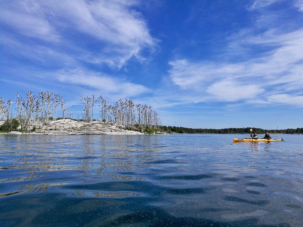 Guided Kayak Tours in Stockholm.jpg