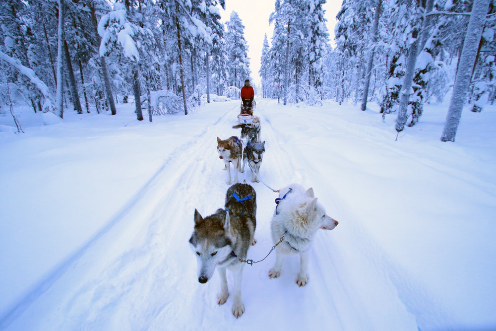 1-day Dodsledding - Discover Dog Sledding in Lapland is an enjoyable and flexible husky sledding tour suitable for a very wide range of participants, whether you are a solo adult traveller, couple, group of friends or family with children.