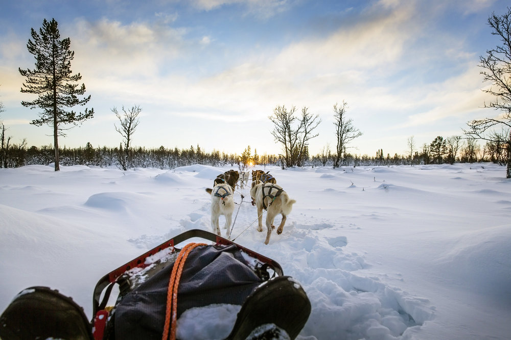 Dogsled Lapland Experience - Dog sledding experience in Lapland wilderness for the whole family. 2,5h. 15-18km. This is an enjoyable and flexible husky sledding tour suitable for a very wide range of participants,