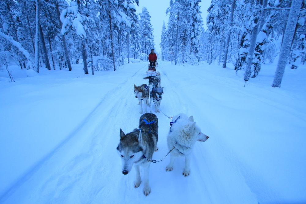 Lapland Husy Experience Guided Tours 6