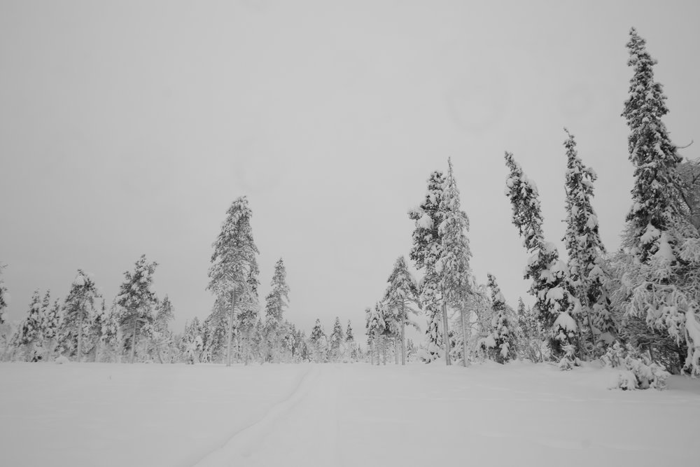 Private Tours in Lapland - Winter Experience Tours - Sweden 11