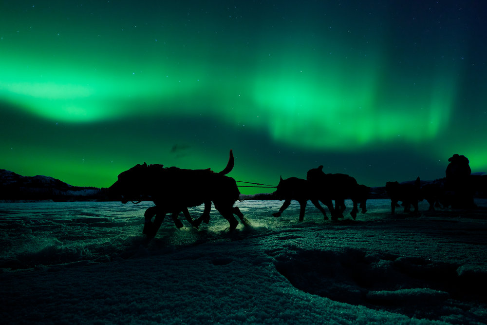 yukon-sled-dog-team-pulling-under-northern-lights-PYSJQTW.jpg