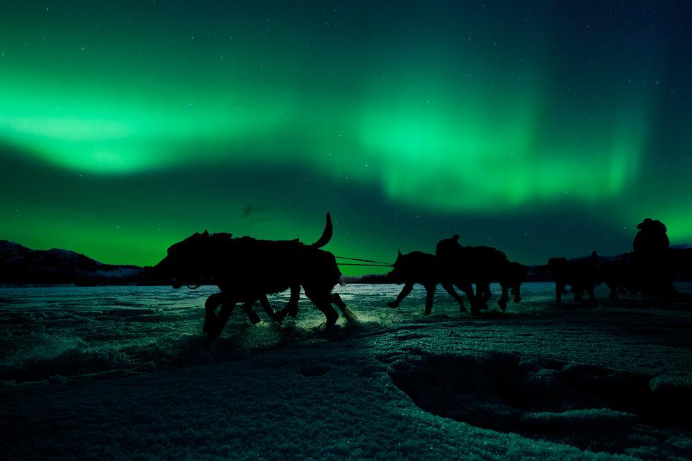 yukon-sled-dog-team-pulling-under-northern-lights-PYSJQTW.jpg
