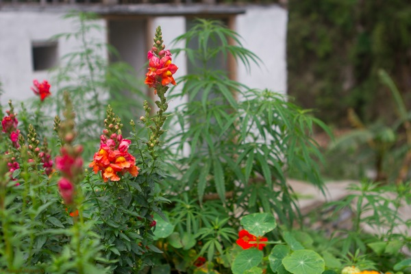 garden with