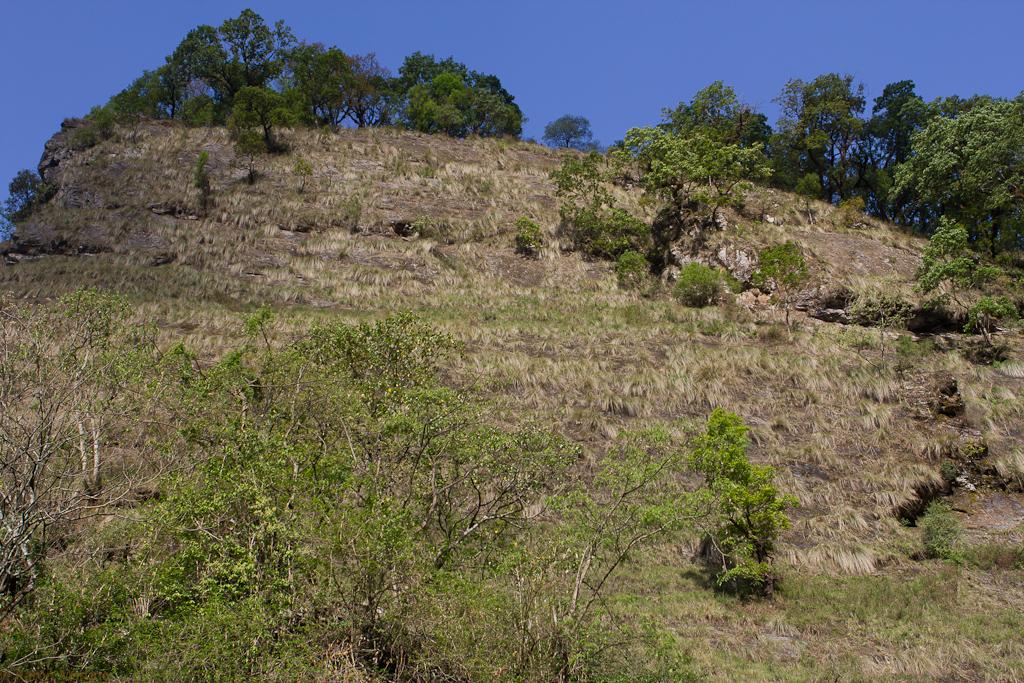 Grassy cliffside