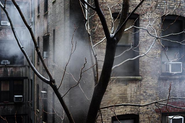 Cloud in tree.  #nycweather #newyorkcity #streetphotography #trees #artphoto #february