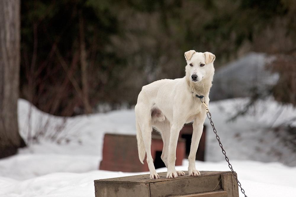 Dogs-2.jpg