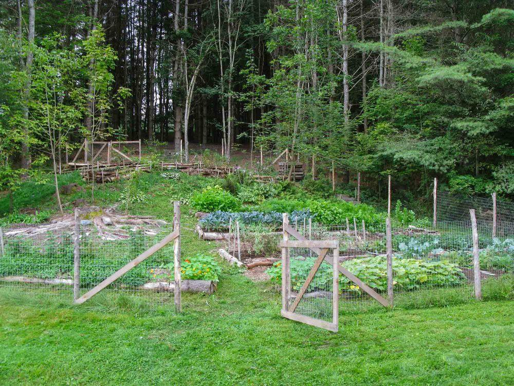 Garden - Portfolio.jpg
