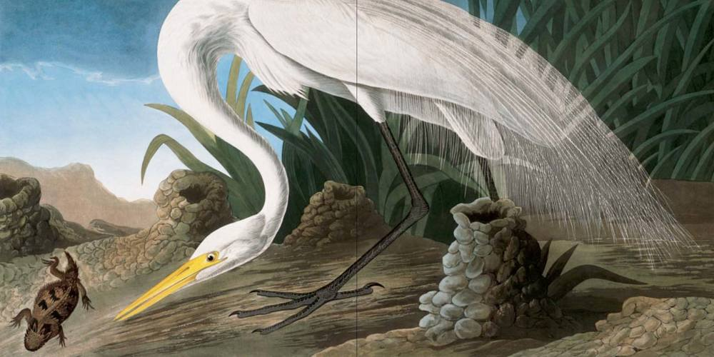audubon_case-15.jpg