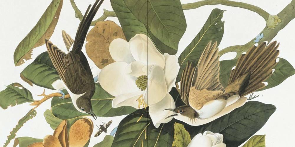 audubon_case-19.jpg