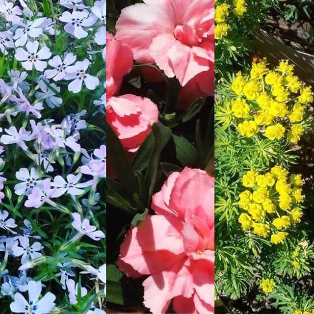 Hezkou slunečnou neděli všem , opět se uvidíme v pátek a v sobotu na horním náměstí . ✌🌞🌼 #sunnyday🌞 #sunday #flowers #relaxed #coctail