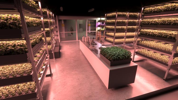 I et gammelt kontorslokale på Økern bygger BySpire Norges største vertikale dyrkningsanlegg med mulighet for å produsere over 5,000 planter per måned.
