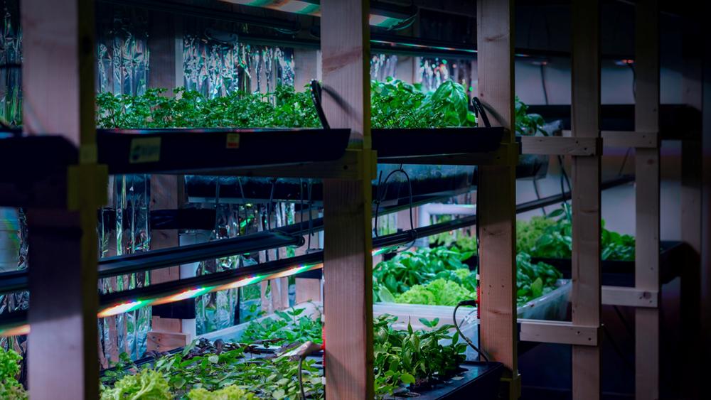 I et gammelt arkivrom på tidligere Landbrukets Hus i Oslo satte BySpire opp et test-labb, hvor ulike urter, salater og kål ble testet.
