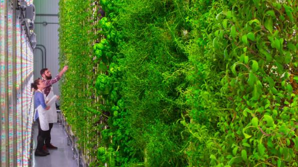 Jeff Bezos og flere andre store investorer investerte $200 mill i vertical farming startupen Plenty