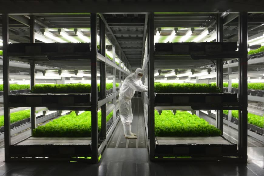 """""""Spread"""" som er en av Japans over 200 plantefabrikker dyrker salater i Kameoka, Kyoto Prefecture. Her kan man produsere over 20,000 salathoder per dag."""