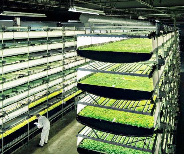 AeroFarms i Newark, New Jersey, skal være verdens største vertikale farm. De bruker ikke hydroponi, men aeroponi, som betyr at røttene sprayes med vann istedenfor å vokse rett i vannet