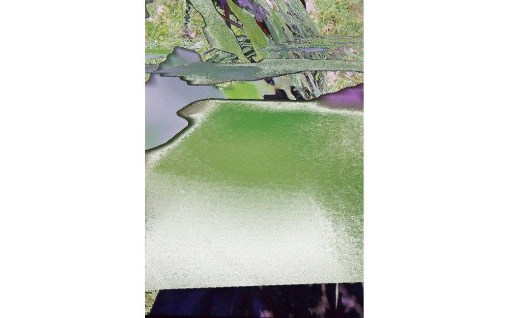Woodland , 2016 archival inkjet print image size: 16 x 11''