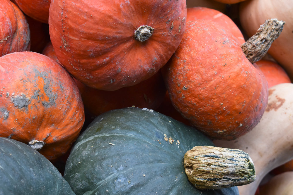 Squash from Curries Farm Market in Collingwood, ON