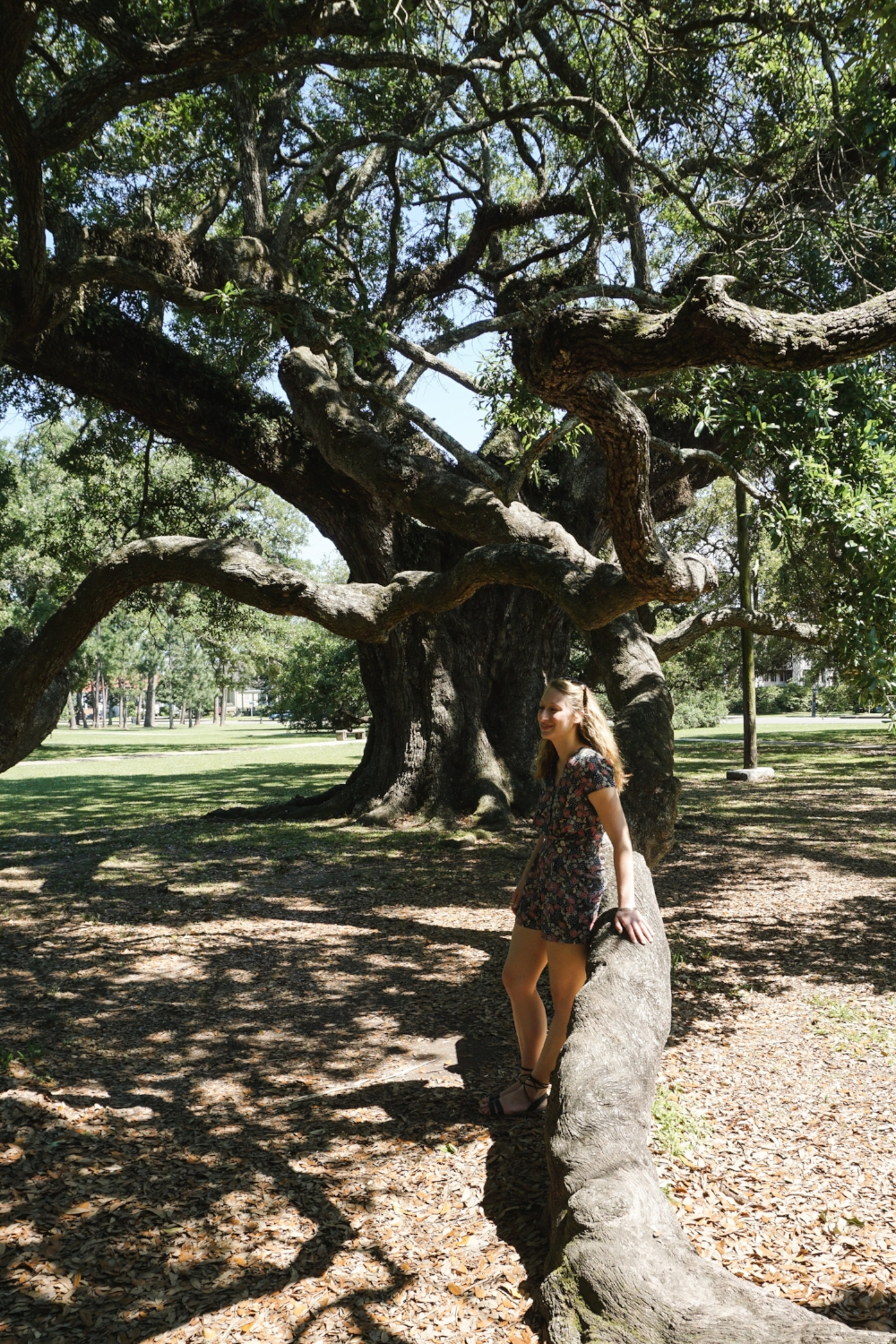 New Orleans_City Park_Oak Trees_Tripp Films Travel