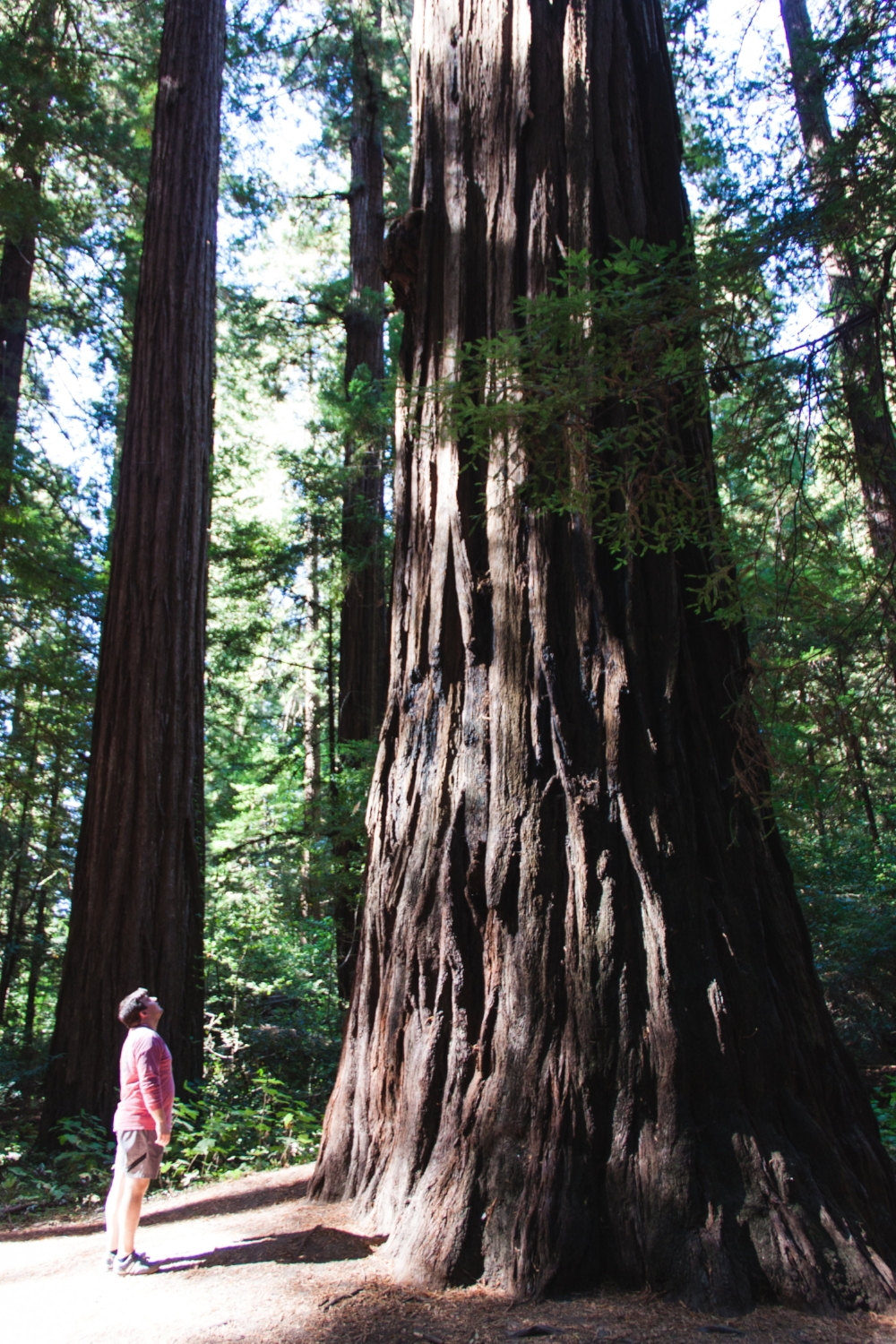 West Coast Road Tripp_Tripp Films_Redwoods_Rebrand Inspiration