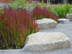 Ornamental grasses horticare landscape company japanese blood grass workwithnaturefo