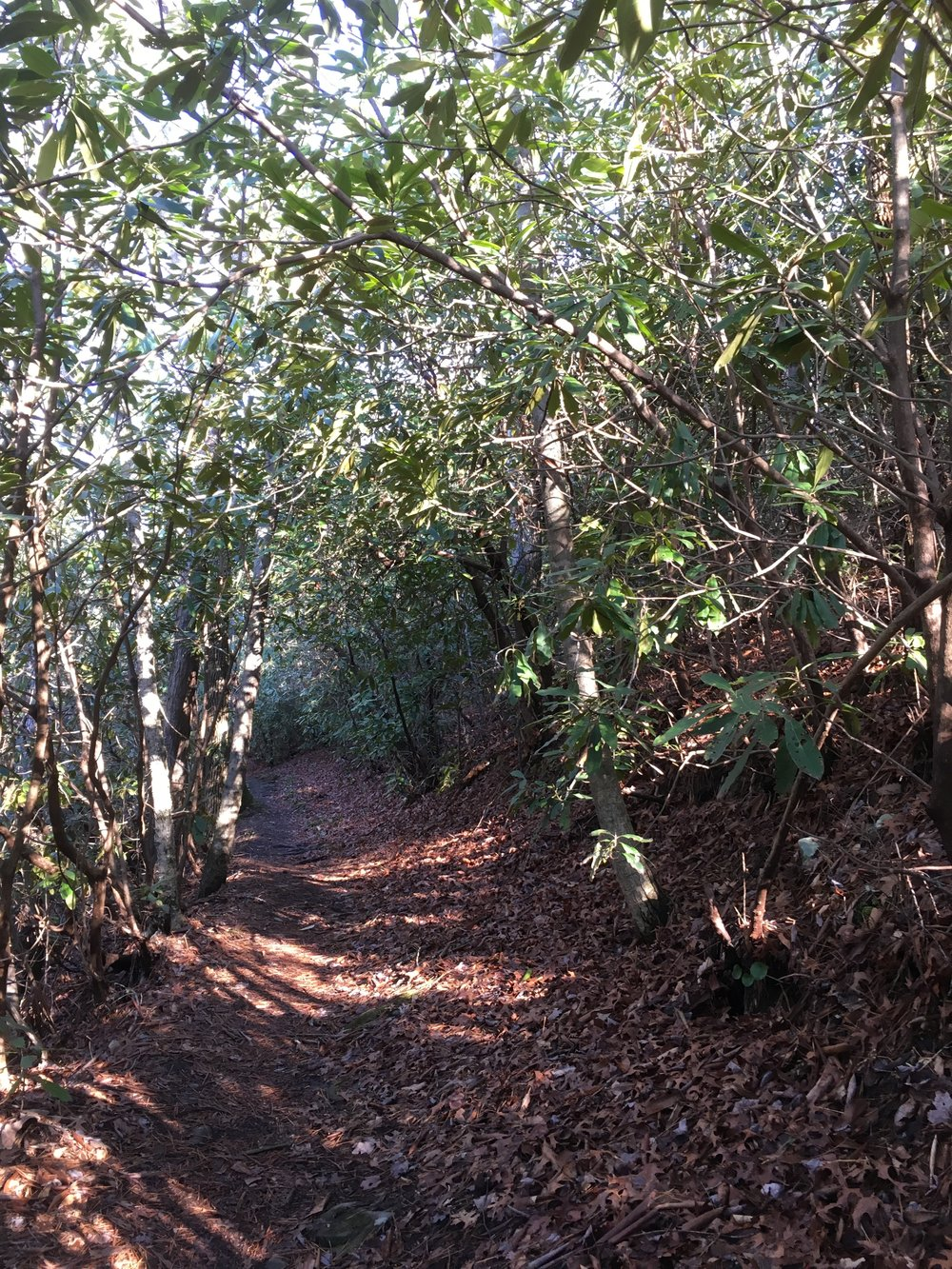 Rhododendron covered trails.