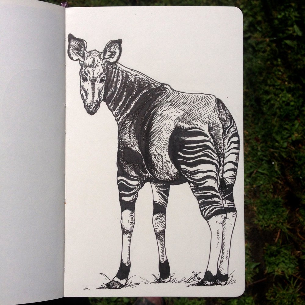 Day One - Okapi