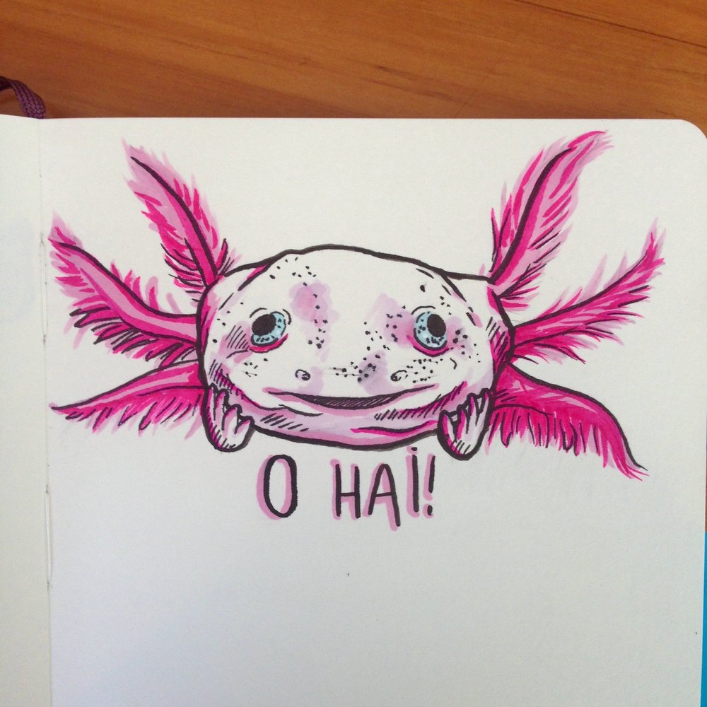 Day Two - Axolotl