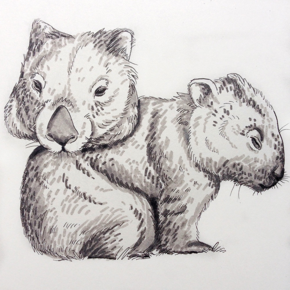 Day Three - Wombat