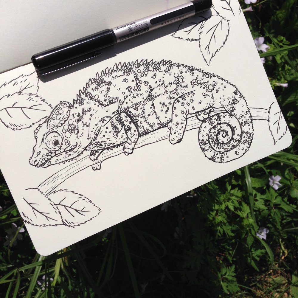 Day Four - Chameleon