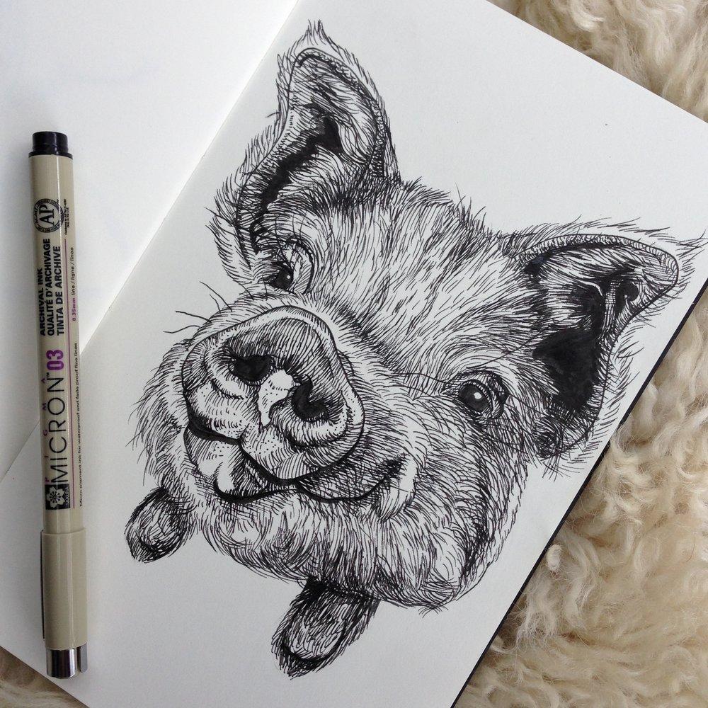 Day Ten - KuneKune Pig