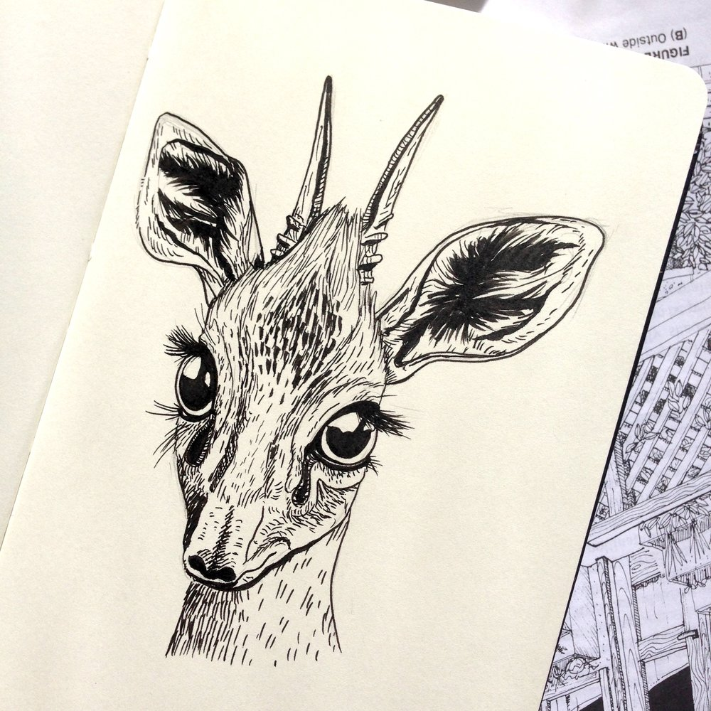 Day Twenty-Four - Dik-dik