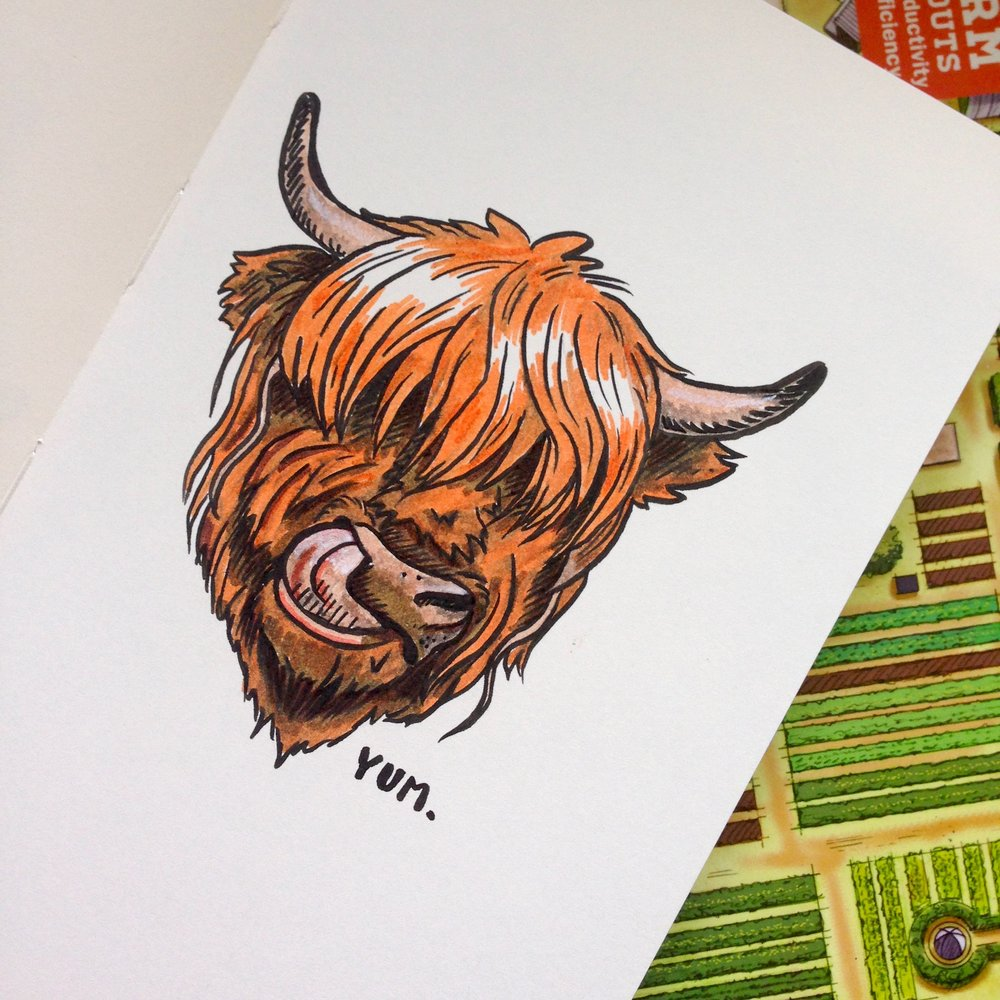 Day Twenty-Six - Highland Cattle