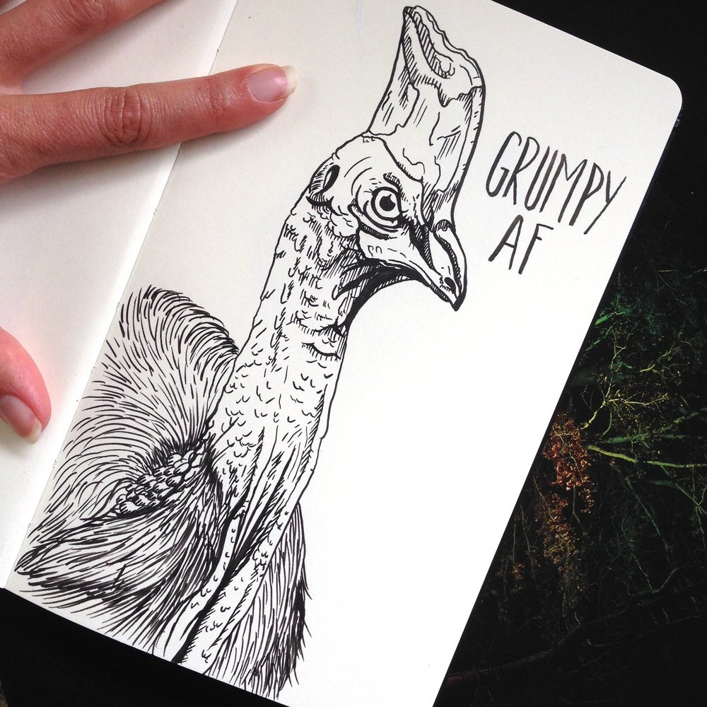 Day Twenty-Nine - Cassowary